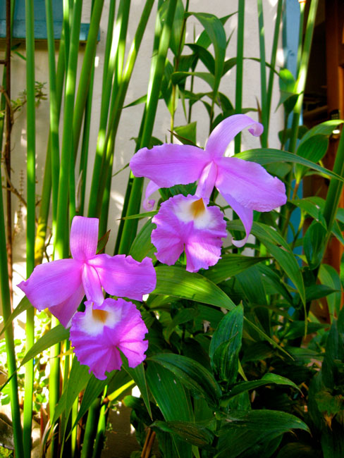 Orchid Care & Cultivation
